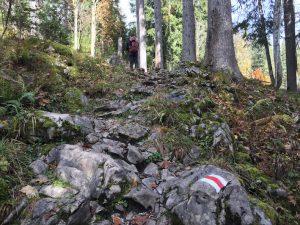 Wanderung über das Gottesackerplateau_Waldsteig